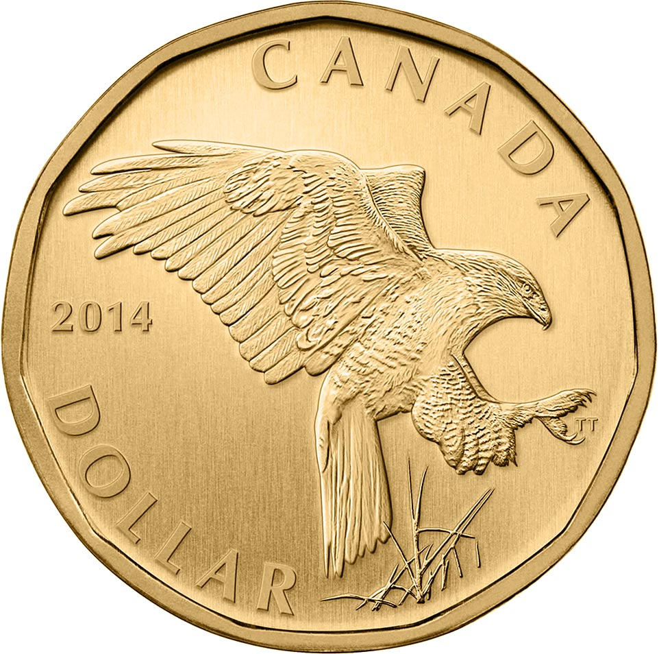 Image of 1 dollar coin Ferruginous Hawk Loon | Canada 2014