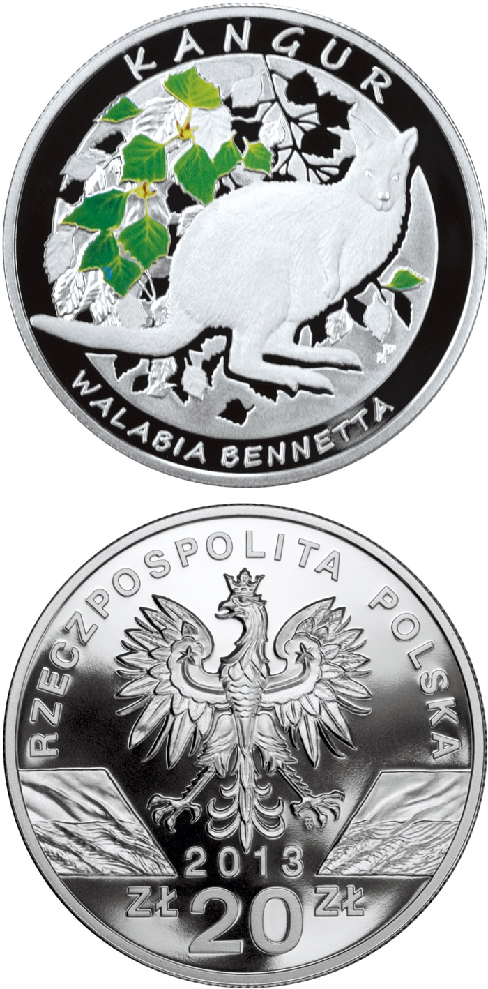 Image of 20 zloty coin Kangaroo – Red-Necked Wallaby | Poland 2013.  The Silver coin is of Proof quality.