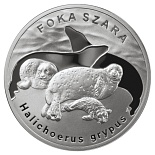 20 zloty Grey seal - 2007 - Series: Animals of the World  - Poland